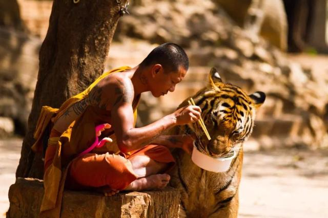 Kanchanaburi Tiger Temple